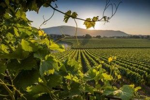 turismo-enogastronomico-strada-vino-franciacorta-wine