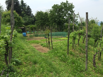 Another view of a garden in Montevecchia