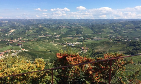 View of vineyards from La Morra