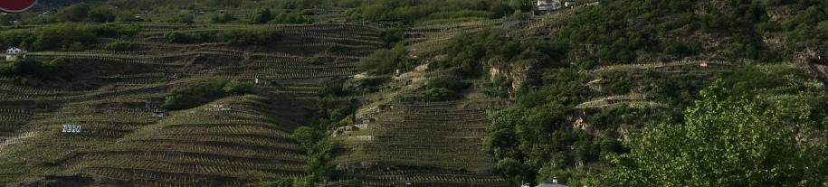 Vineyards in Valtellina